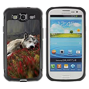 ZETECH CASES / Samsung Galaxy S3 I9300 / GRAY WOLF IN FIELDS / Gris lobo en campos / Robusto Caso Carcaso Billetera Shell Armor Funda Case Cover Slim Armor