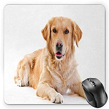 Amazon Com Bglkcs Golden Retriever Mouse Pad Young Pedigree Puppy
