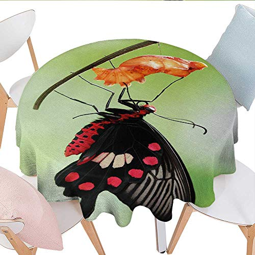 (Antaquzhuq Tablecloth for Kitchen Dining Tabletop, Amazing Moment Coming Out of Cocoon Chrysalis Transformation, Dinning Tabletop Decoration (Round, 50 Inch, Red Black Green))