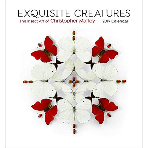 (Exquisite Creatures Insect Art 2019 Wall Calendar)