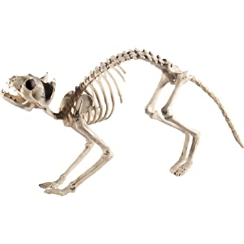 Smiffys Katzen Skelett, 60x12x25cm, 46913: Amazon.de: Spielzeug