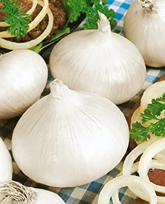 Todd's Seeds White Sweet Spanish, RM Long Day Onion Seed - 2g Packet