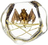 The Real Insect Co. ST25BL01 Black Bat on Branch Decoration Figurine