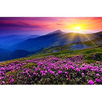 Omgposters Ej0787 Beautiful Nature Landscape Flowers Sunset 36x24 Print Poster