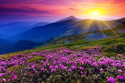 Amazon Com Omgposters Ej0787 Beautiful Nature Landscape Flowers