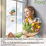 FLORO Transparent Window Shelf, 7x3 Inches, Crystal Clear Acrylic Ledge for Plants and Flowers, Lightweight PlexiGlass Plant Holder, 2 Suction Cups Included, for Window Gardens and Terrariums