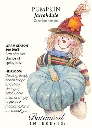 Jarrahdale Pumpkin Seeds - 2 grams - Heirloom