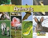 Animals, Rebecca Rissman, 1432922807