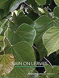 Rain On Leaves (short)
