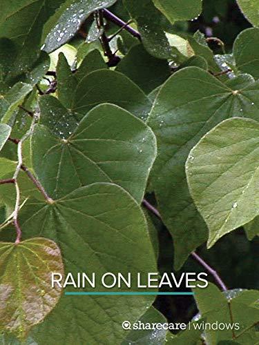 Rain On Leaves (short) (Best Yoga For Stress Reduction)