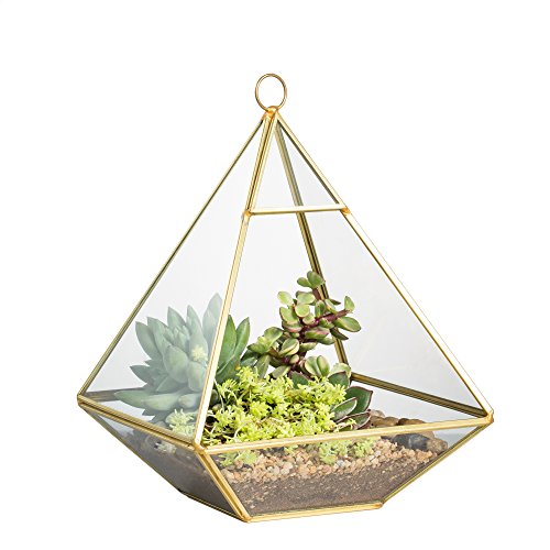 NCYP Copper Pyramid Vertical Metal Glass Geometric Wall Hanging Terrarium Brass Tabletop Succulent Air Plants Holder Planter Fern Moss Box Display Vase Pot 5.9 x 5.9 x 7.87 inches Gold (Gold Vase Geometric)