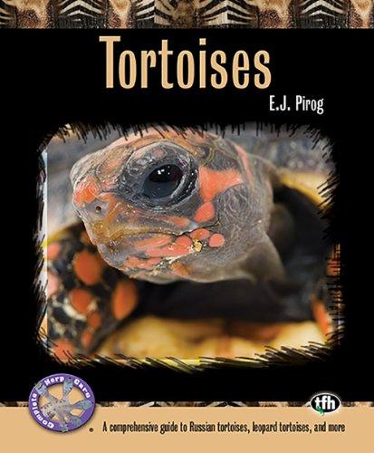 tortoises a comprehensive guide to russian tortoises