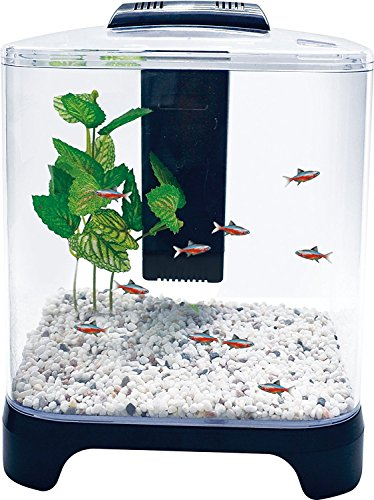 Penn Plax Betta Fish Tank Aquarium Kit With LED Light and Internal Filter Desktop Size, 1.5 Gallon