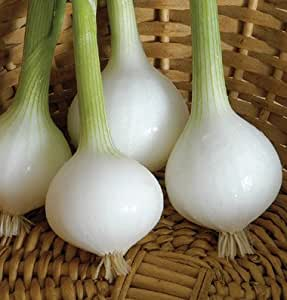 Onion Pearl Drop Bunching D2948A (White) 1000 Seeds by David's Garden Seeds
