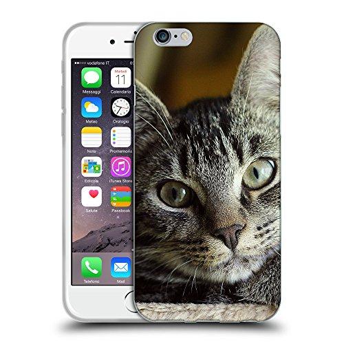 """Just Phone Cases Coque de Protection TPU Silicone Case pour // V00004256 Attentif regard du chat domestique // Apple iPhone 6 4.7"""""""