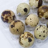 Quail Egg Cartons, Pack of 50, Each Holds 12 Quail Eggs, Bulk Carton for Dozens of Small Eggs, Quail, Pheasant, or Grouse, Cartons Only No Eggs Included, by American Heritage Industries