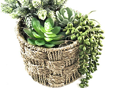 Be Polight 6 Pcs Unpotted Faux Succulents Assorted