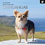 2018 Chihuahuas Calendar - 12 x 12 Wall Calendar - With 210 Calendar Stickers
