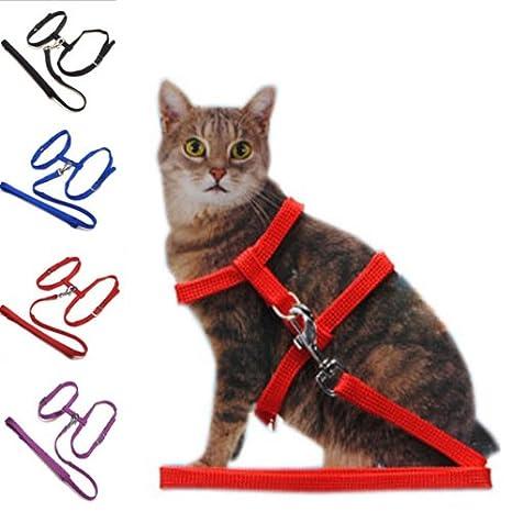 Gato cinturón de seguridad ajustable cuerda de nylon arnés Gatito Plomo Correa Opción: Purple: Amazon.es: Productos para mascotas