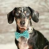Aqua Silver Chevron - Small Dog Bow Tie - Cat Bowtie