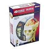 Warm Fuzzy Toys Human Cranial Nerve Skull 4-D Vision Anatomy Model Kit