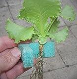 "1"" GrowGrip Plant Holder"