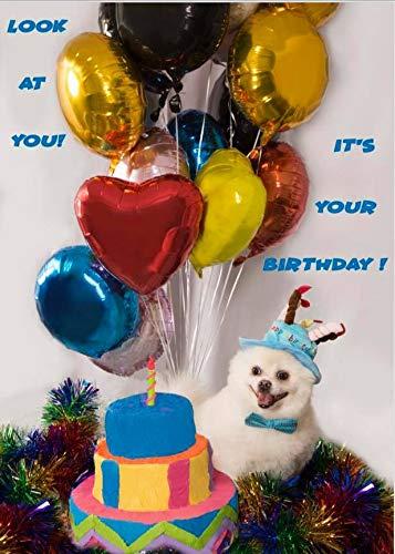 6 Birthday Cards,Poposmiles Birthday Cards,Birhday Hat Collection,White Puppy
