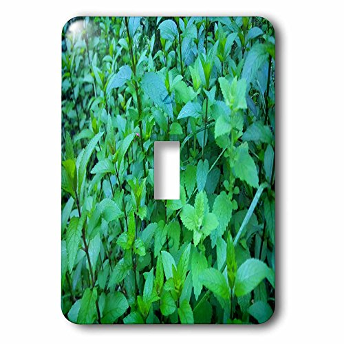 3dRose TDSwhite – Summer Seasonal Nature Photos - Herb Garden Mint Leaves - Light Switch Covers - single toggle switch (lsp_284636_1) (Herb Leaf Single)