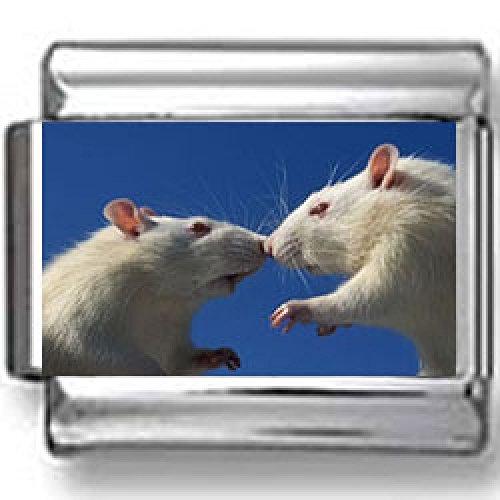 Mice Kissing Photo Italian Charm