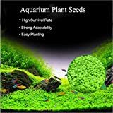 Zafina 3 Pack Aquarium Plant Seeds, Easy to Grow