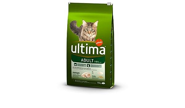 ULTIMA Croquettes au poulet, au riz et aux céréales - Pour chat de 1 a 10 ans - (x1): Amazon.es: Productos para mascotas