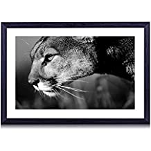 """Big Cat Mountain Lion Watching - Art Print Black Wood Framed Wall Art Picture For Home Decoration - Black and White 16""""x12"""" (40cmx30cm) - Framed"""