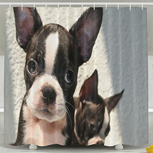 Boston Terrier Shower Curtain Set With Hooks, Waterproof Polyester Fabric Shower Curtains 60 X 72 Inches