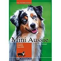 Mini-Aussie: Charakter, Erziehung, Gesundheit