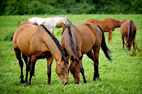 Pacific Southwest Horse Pasture Seed (1.5 Acre) by Nature's Seed (Image #3)