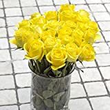 Greenchoice – 50 Fresh cut Yellow Roses | 20 '' long stem | No vase
