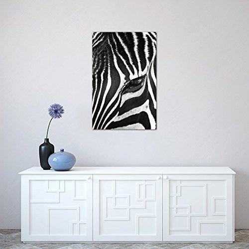 Icanvas zebra stare by bob larson canvas print