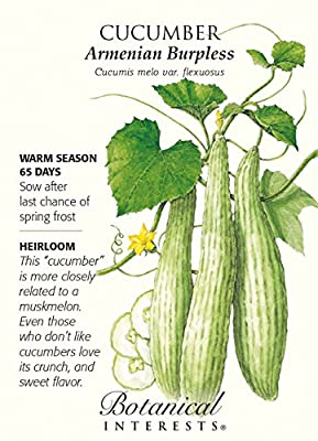 Armenian Burpless Cucumber Seeds - 2 grams - Botanical Interests