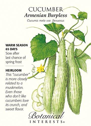 Armenian Burpless Cucumber Seeds - 2 grams - Botanical Interests ()