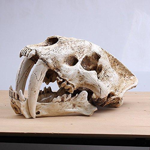 Zgood Saber-Toothed Tiger Skull Model White Medical Sketch Model for Collection Handmade Home - Model Tiger Collection