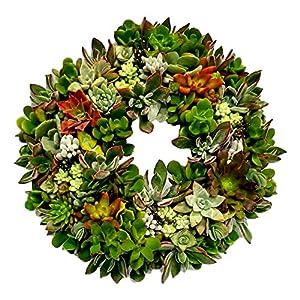 Fat Plants San Diego Living Succulent Wreath, Real Live Succulent Plant Hanging Wreath/Uniquie Succulent Gift or Home Decor 28