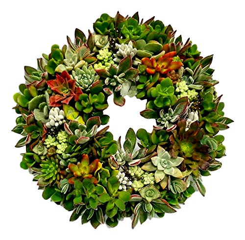 Fat Plants San Diego Living Succulent Wreath (Large) by Fat Plants San Diego (Image #1)