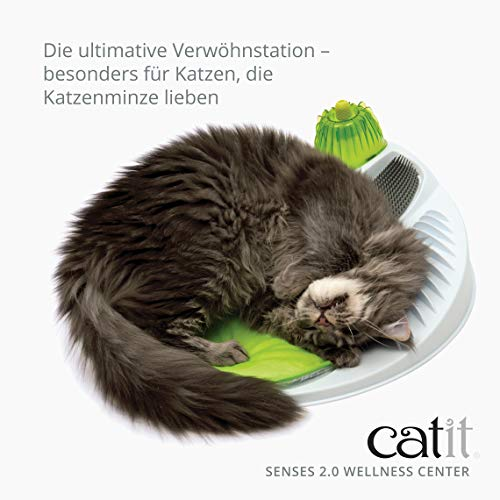 Katzen entspannen