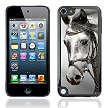Graphic4You Gray Head Horse Animal Design Hard Case Cover for Apple iPod Touch 5th Generation 5G
