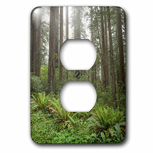 Danita Delimont - Forest - Redwoods, Lady Bird Johnson Grove in fog - Light Switch Covers - 2 plug outlet cover - Grove Outlet