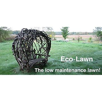 ECO-LAWN Grass Seed Blend Low Maintenance Lawn - 50lb Bag : Garden & Outdoor