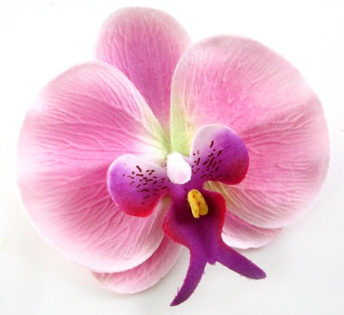 10-Pink-Green-Phalaenopsis-Orchid-Silk-Flower-Heads-375-Artificial-Flowers-Heads-Fabric-Floral-Supplies-Wholesale-Lot-for-Wedding-Flowers-Accessories-Make-Bridal-Hair-Clips-Headbands-Dress