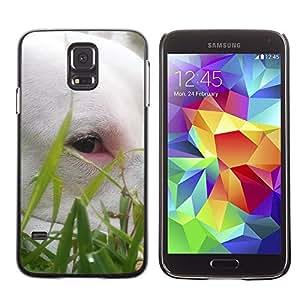 Be Good Phone Accessory // Dura Cáscara cubierta Protectora Caso Carcasa Funda de Protección para Samsung Galaxy S5 SM-G900 // Cute Bullterrier Grass Summer Dog Pet