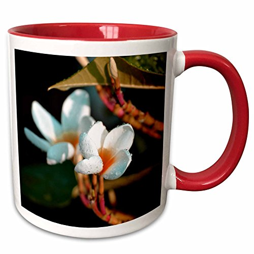 3dRose Susans Zoo Crew Photography Flowers - lei flower orange colorized - 15oz Two-Tone Red Mug (mug_184432_10) (Flower Lei Tone Two)