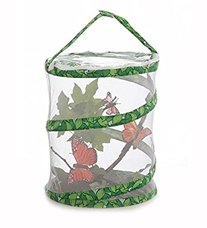 Amazon.com: Insect Lore Butterfly Garden 12 Netted Pavilion by ...